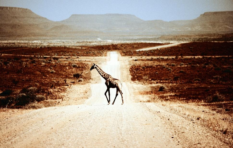 giraffe landschaft kopie