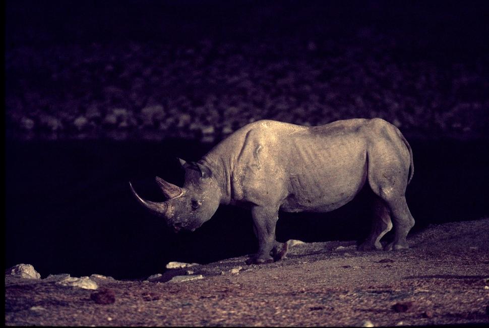 Rhino nschts